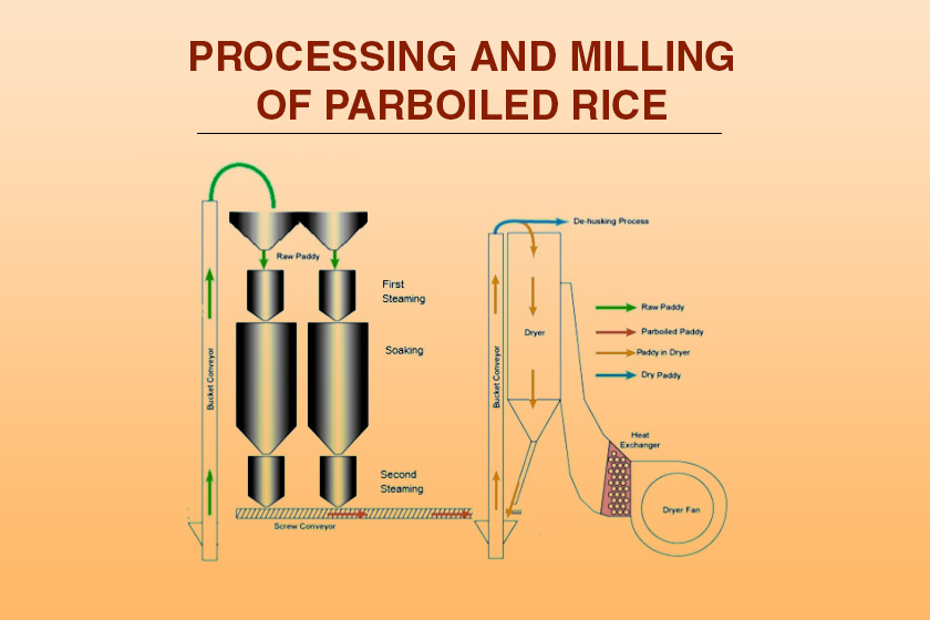 Processing And Milling Of Parboiled Rice